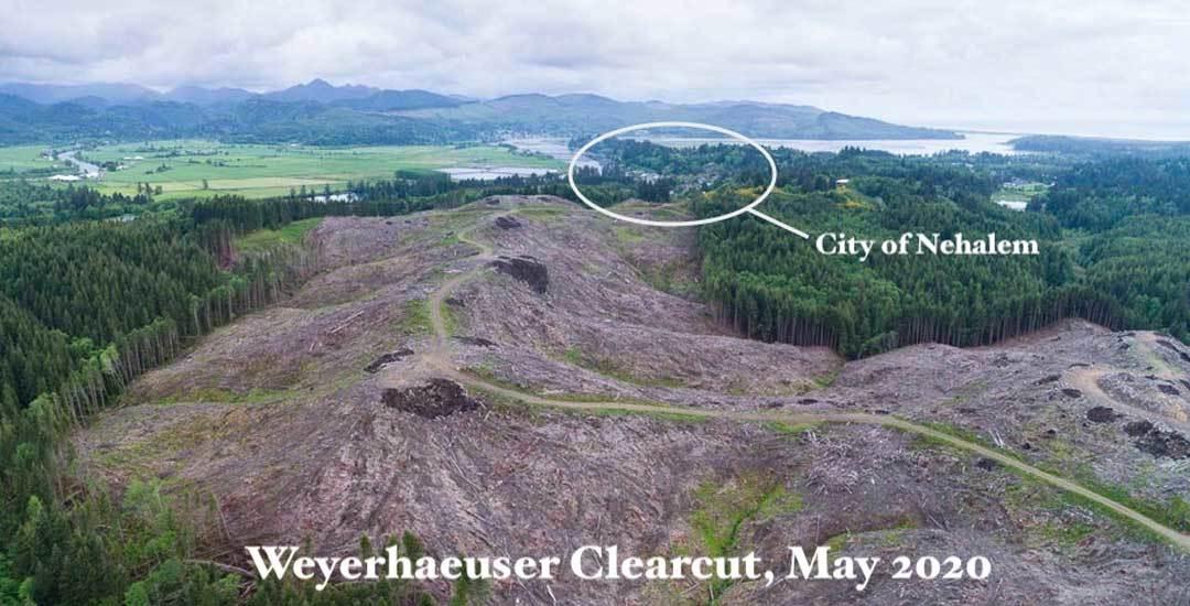 Weyerhaeuser Clearcut Nehalem 2020