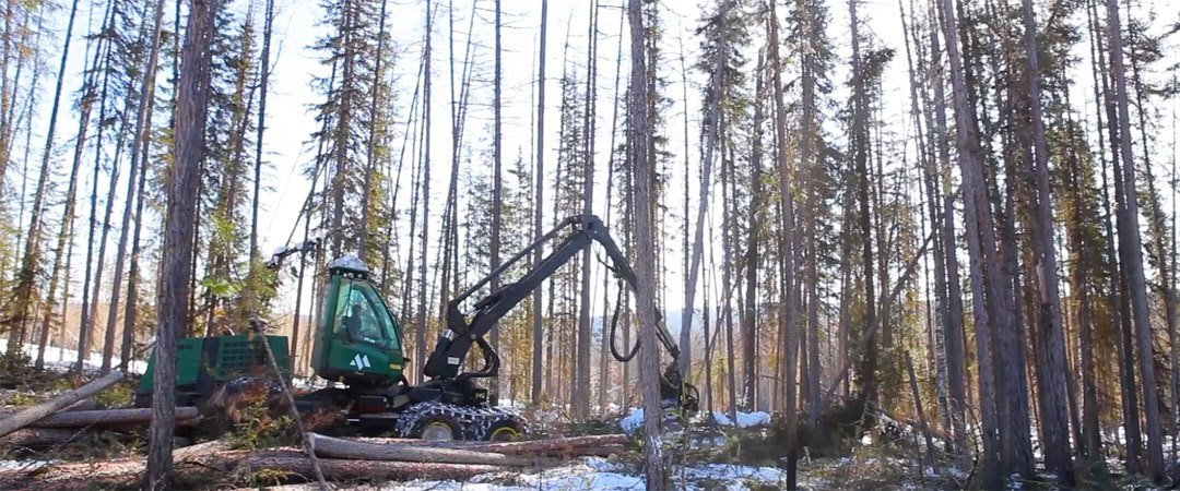 Heavy equipment destroying forest